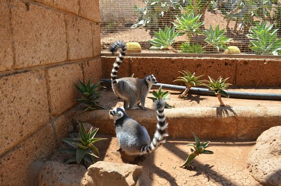 Monkey Park : лемуры
