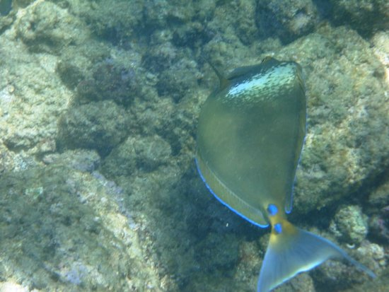 Lawa'i Beach: fish