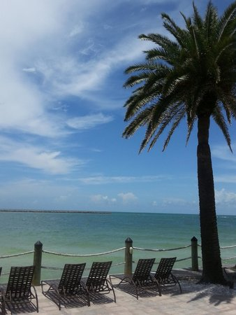 Holiday Inn Hotel & Suites Clearwater Beach: Can never get enough of these palm trees!