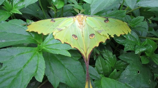 Butterfly Wonderland: Cool butterfly