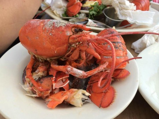 Fisherman's Friend: My lobster - after