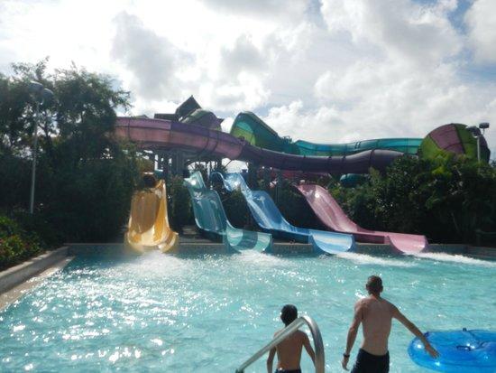 Aquatica Orlando: toboagua divertido demais