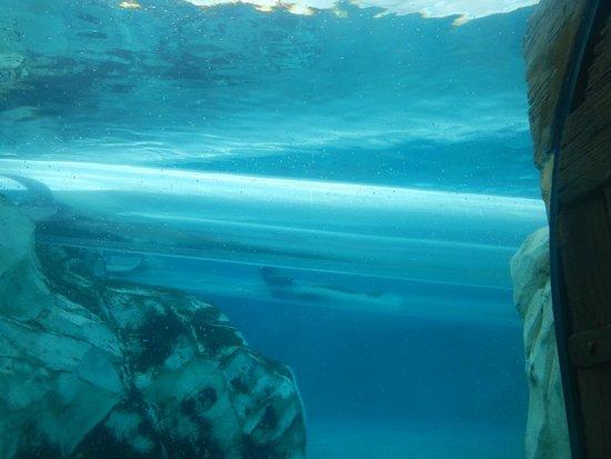 Aquatica Orlando: vista do toboga que visualiza os golfinhos
