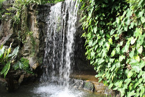 Wallpaper Singapore Botanic Gardens Nature Waterfalls Pond