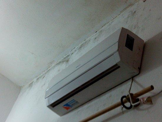 Posadena Linda Hostel: Pared y techo habitación