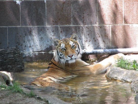 Henry Doorly Zoo: Chillin in the pool