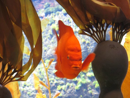 Henry Doorly Zoo: Ocean shot