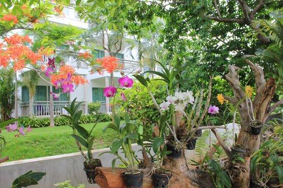 Peace Laguna Resort: красивые цветы