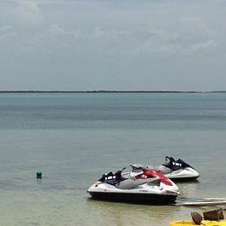 Hilton Key Largo Resort: First time on a jet ski...fantastic!! A pod of dolphins followed the person before me!