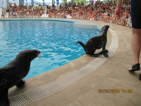 Queens Park Tekirova Resort and Spa: Морские котики в дельфинарии