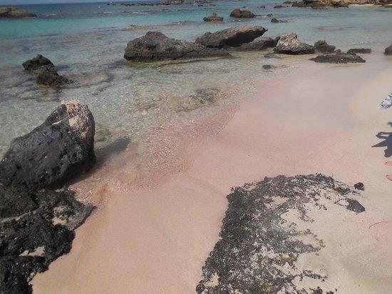 Elafonisi Resort by Kalomirakis Family: Spiaggia rosa per presenza di particelle di corallo rosso