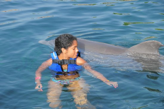 Delphinus Xcaret: Hardly can see dolphin, dolphin swam while kids had to be quick to touch it