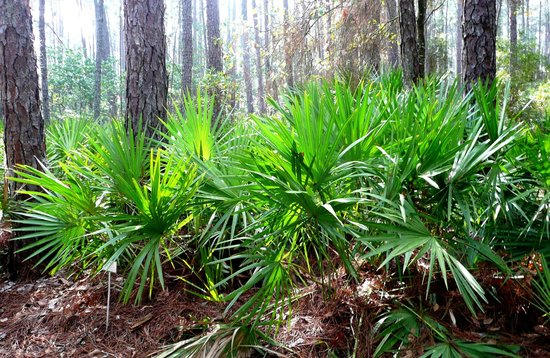 Photo of Nature Preserve Newhall Audubon Nature Preserve at 88 Palmetto Bay Rd, Hilton Head, SC 29928, United States
