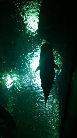 Parque Explora: Shark overhead