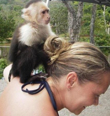 Sandy Bay Beach: The only time I actually enjoyed having a monkey on my back! ��