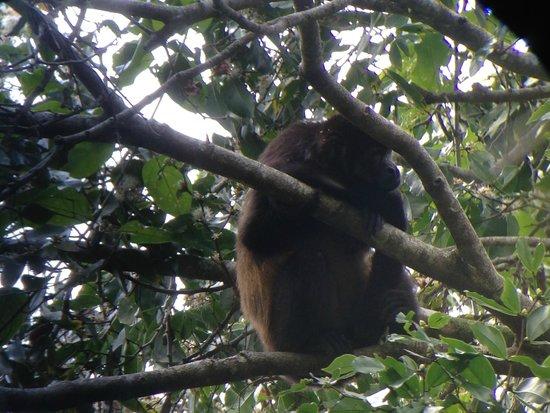 Playa Manuel Antonio: Monkey