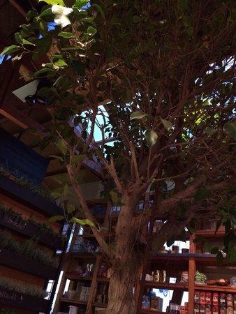 Cuines Santa Caterina : Tree