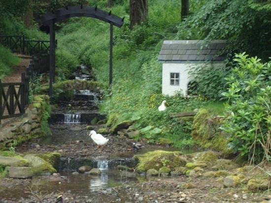 Duchally Country Estate : Duck pond