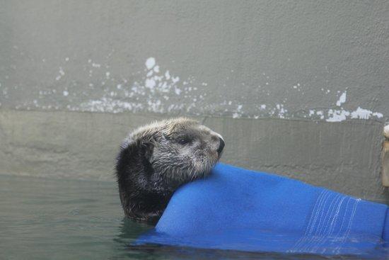 Seattle Aquarium : Cute otter