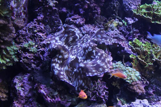Seattle Aquarium : One of the views