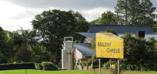 Maleny Cheese: from the road