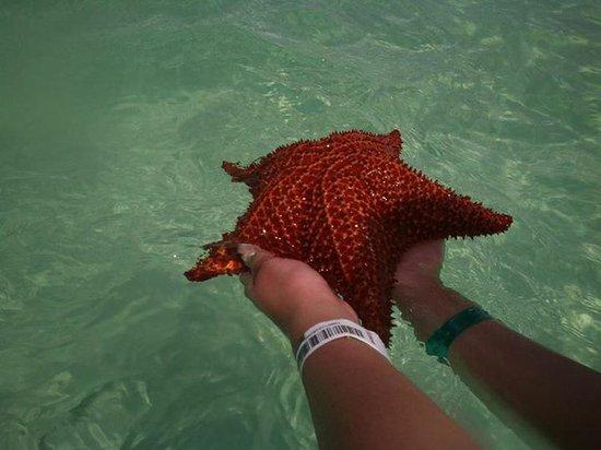 Isla Saona: Estrella de mar en piscina natural <3