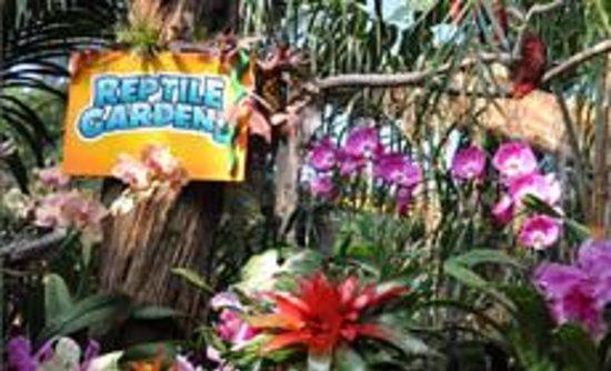 Reptile Gardens: beautiful & colorful