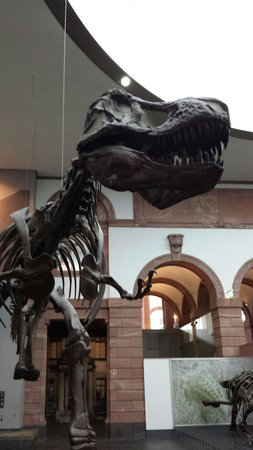 Naturmuseum Senckenberg: T Rex