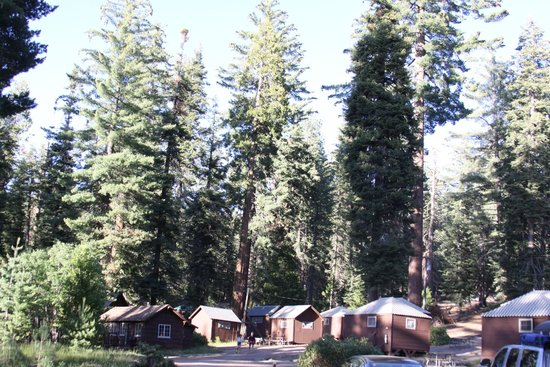 Grant Grove Cabins: property