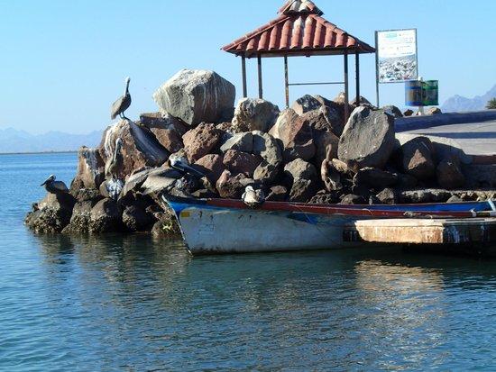 El Tiburon Casitas : boat launch area