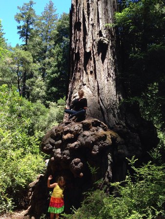 Big Basin Redwoods State Park : My beautiful wife enjoying a zen moment!