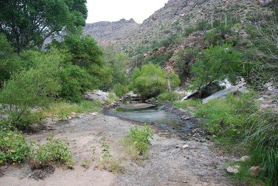 Sabino Canyon : Canyon Creek