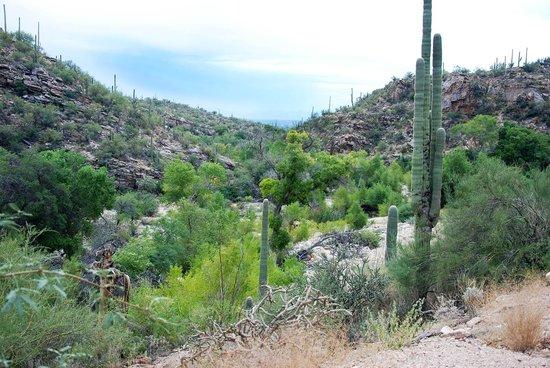 Sabino Canyon : Canyon Vista