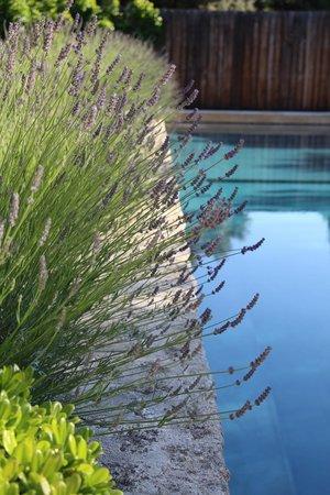 La Bergerie de Nano : Lavender in bloom by the pool
