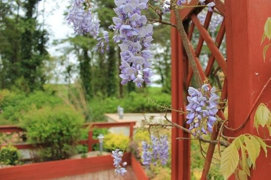 The Earl of Desmond Hotel : garden