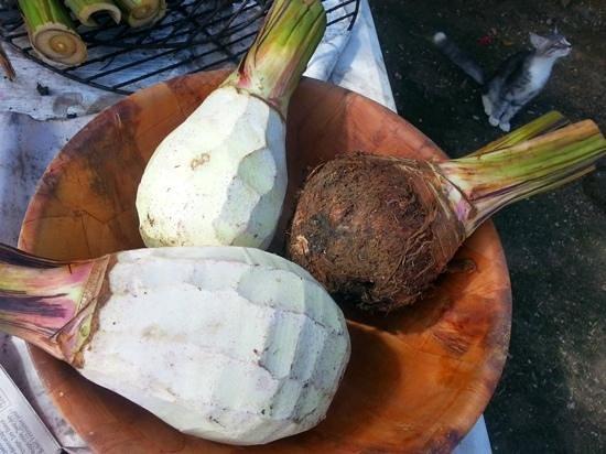 Pension Chez Rosina: Racines de taro preparee par Hanalei