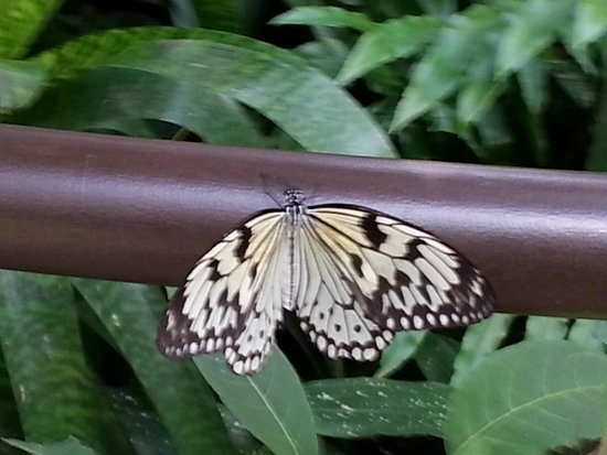 Butterfly Rainforest: Butterfly