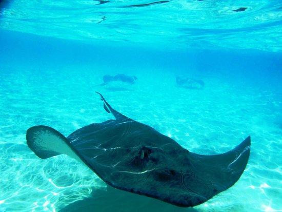Cayman Ocean Adventures Stingray City & Snorkeling Tour: Prachtig water, vele roggen en zeer vriendelijke staff, een aanrader!!