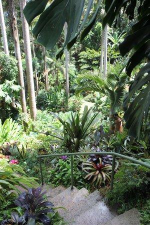 Hunte's Gardens: Steps through the garden