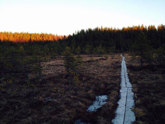 Joutsa, Suomi: Syysniemi
