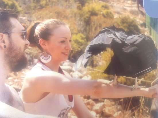 Teleferico Benalmadena : vulture display