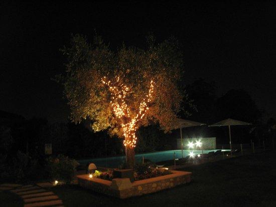 Agriturismo Corte Aurea : Pool area at night