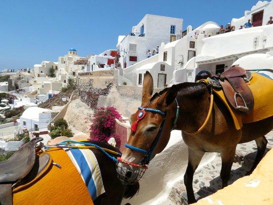 Skala Restaurant: The mules being led down toward the caldera