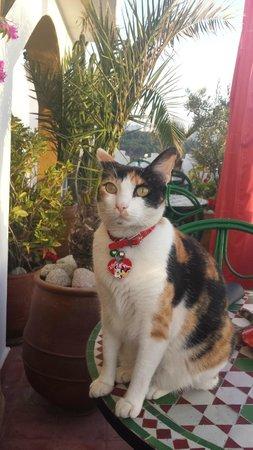 Dar Sultan: La   chatte de la maison