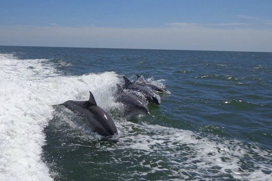 Thundercat Dolphin Watch: June 2014