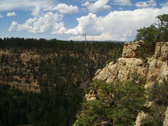 Grand Junction, CO: Carson Hole, in the general area the T trail cuts through the Uncompahgre plateau