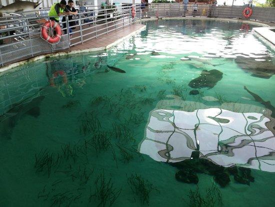 Mote Marine Laboratory and Aquarium: Shark Tank