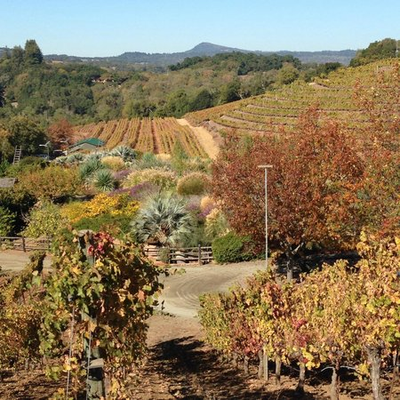 Benziger Family Winery : View of the Benziger Winery from the tops of the hill, in the fall