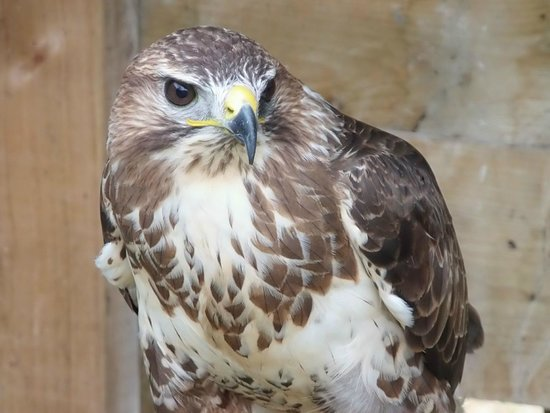 Tamar Otter and Wildlife Centre: owl