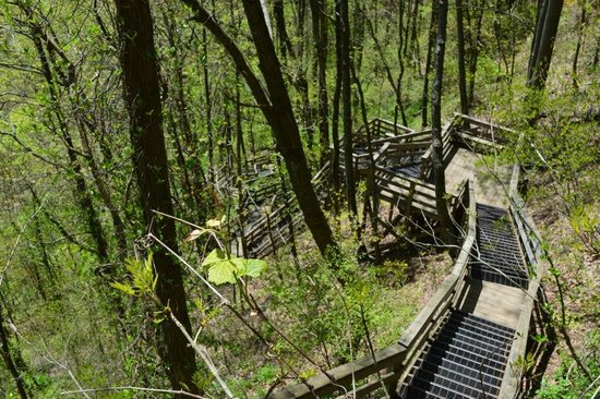 Amicalola Falls State Park : stairs from the top